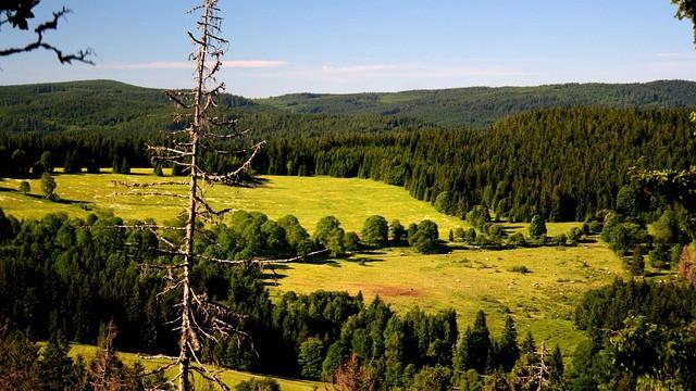 Šumava a IUCN: území pro divočinu může zabírat hned polovinu NP, nejen 30% dle rezoluce