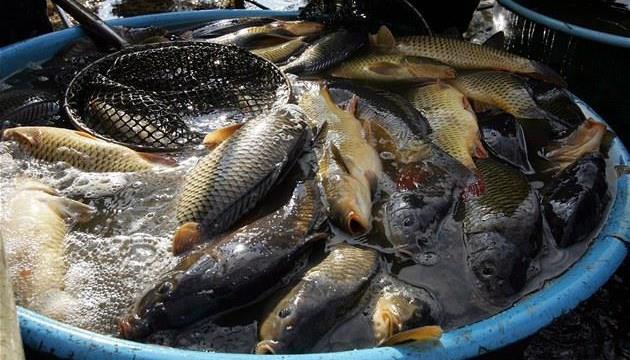 """Kdyby byly mluvily ryby…"" 22. 12. 2015 v 18h"