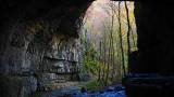 Fascinující objev slovenských vědců: Průsvitný šváb s obří hlavou létá v jeskyních na netopýrech