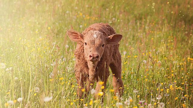 LETOS POPRVÉ – Světový den – Zvířata nejsou zboží k přepravě