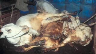 Indie pro zvířata – 19. 9.