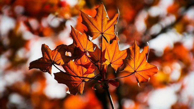 Podzimní spirituální apatyka – Dům techniky vPardubicích 21. a 22. října 2016