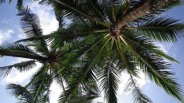 PRÁVĚ TEĎ: palmový olej zastaven!