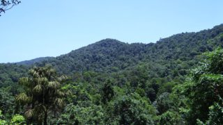 Vláda navrhla zastavit rozprodej státních lesů. Potřebují však také lepší hospodaření a víc svobody pro přírodu. Komentář ke schválení novely lesního zákona