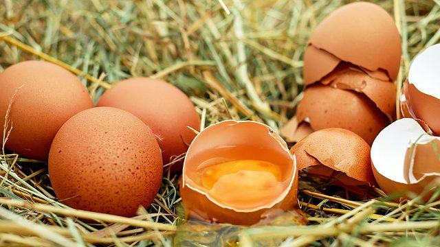 Praha 8. 4. – Tajemství vaječného průmyslu