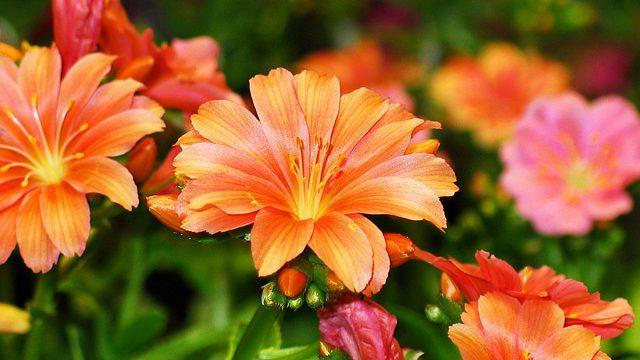Květen – měsíc Lásky a změn