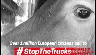 Více než milion Evropanů vyzývá EU: Zastavte kamiony se zvířaty