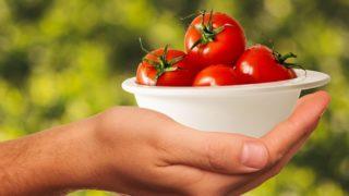 """Video: Plastové moře. Aneb jak se ve Španělsku """"vyrábějí"""" ve skelné a kamenné vatě rajčata pro evropský trh, která by místní nevzali do úst"""