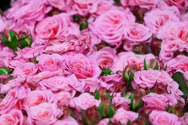 připojte růže